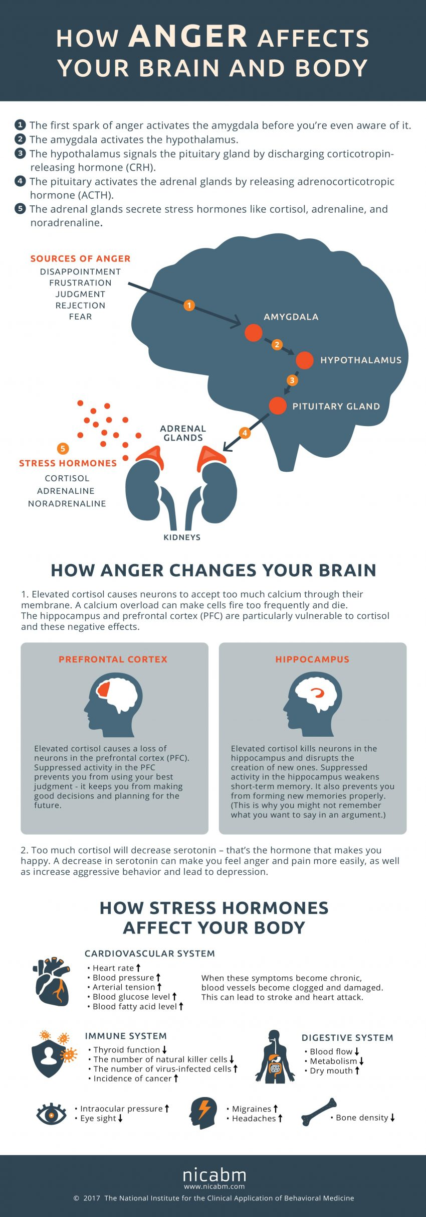 infographic-how-anger-affects-your-brain-anger-affects-your-brain